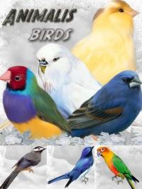 ANIMALIS-Birds