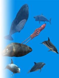 Rigged Sea Animals