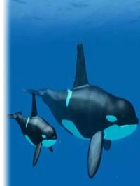 Underwater Animals Pack