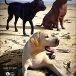Labrador for Daz Dog 8